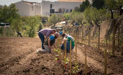 Arranca la plantación de viñedo en el proyecto enológico de Masos en el Valle de Guadalest
