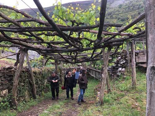 Tecnovino viticultura heroica simposio 3