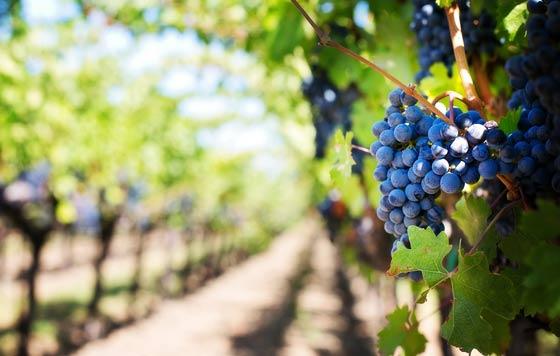 Tecnovino Big Data vitivinicola proyecto VINCI UPO