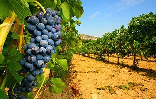 Tecnovino Master en viticultura y enologia