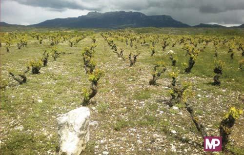 Tecnovino libro Tecnicas viticolas frente al cambio climatico detalle