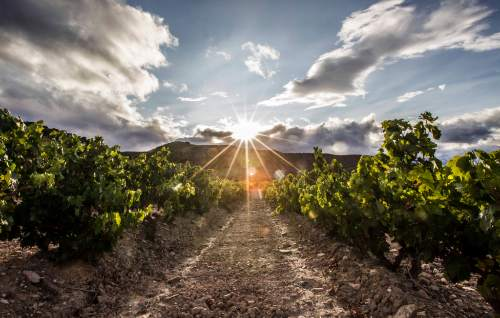 Tecnovino viñedos singulares