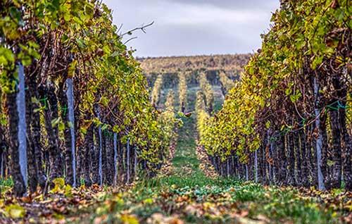 Tecnovino extension de norma de la Interprofesional del Vino Union de Uniones