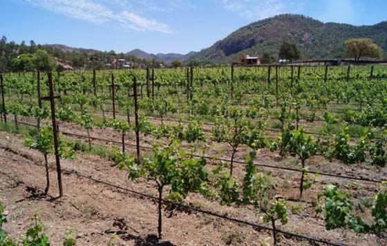 Tecnovino sector vitivinicola OIVE