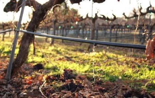 Tecnovino Grupo Rioja investigación riegos del viñedo