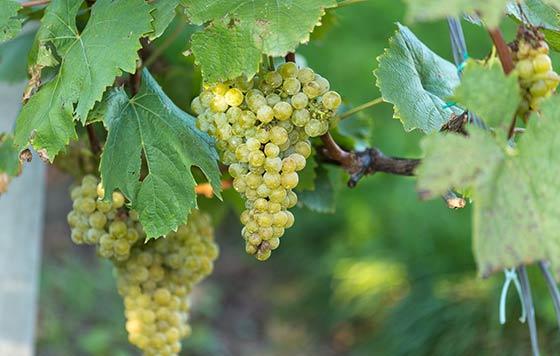 Tecnovino reconocimiento facial en la viticultura Raw Data detalle