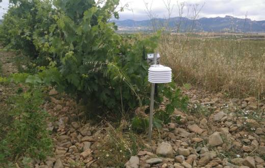 Tecnovino Proyecto Oidio Detection