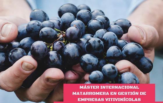 Tecnovino Máster en Gestión de Empresas Vitivinícolas Matarromera detalle