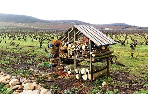 Tecnovino La Rioja Alta albergue insectos vinedo