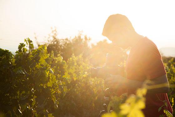 Tecnovino Jorge Comi fotografo vino