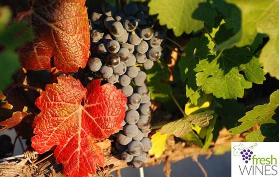 Tecnovino proyecto Freshwines frescura de los vinos espanoles detalle