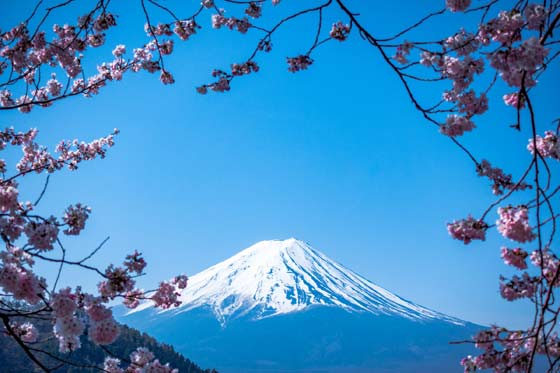 Tecnovino Japón Monte Fuji