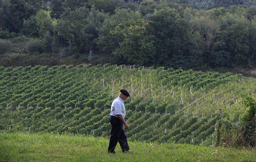 Tecnovino apoyo vitivinicola