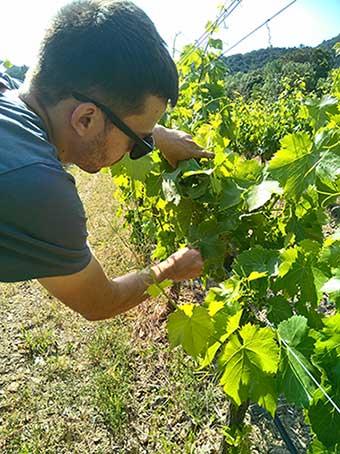 Tecnovino sostenibilidad vitivinícola Proyecto Life Priorat + Montsant