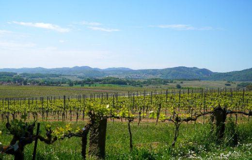 Tecnovino Union de Uniones ayuda al sector del vino