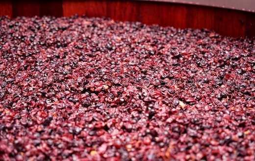 Tecnovino Vitalver vermicompostaje para el viñedo