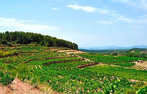 Tecnovino producción vitivinícola sostenible Life Priorat Montsant detalle