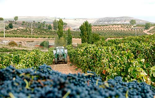 Tecnovino viticultores tractor vendimia UPA detalle