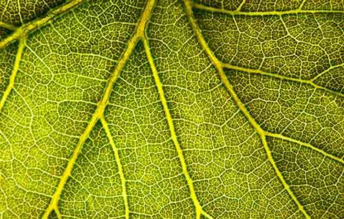 Tecnovino OIV futuro de la actividad vitivinícola detalle