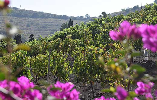Tecnovino Ruta del Vino de Gran Canaria detalle