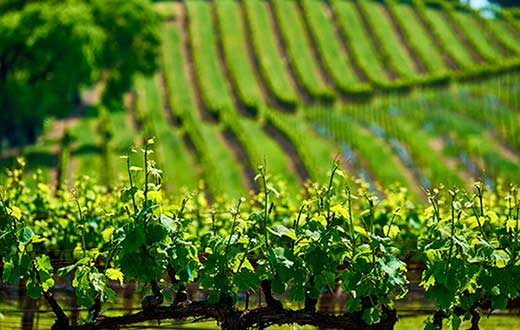 Tecnovino consumo de fitosanitarios en viñedo proyecto Gophytovid