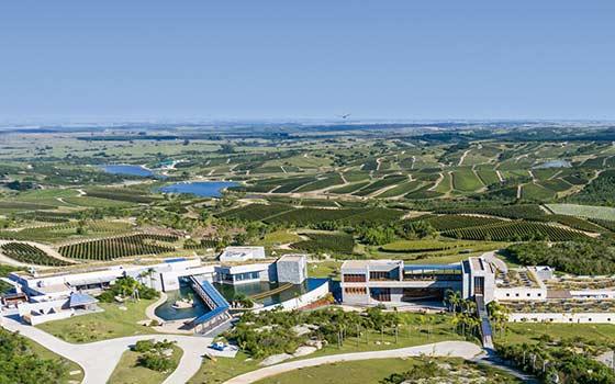 Tecnovino mejores viñedos del mundo 2020 Bodega Garzón