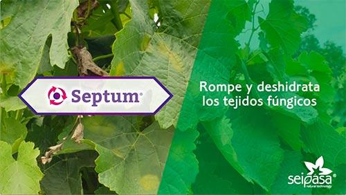 Tecnovino mildiu y oídio de la vid Septum Seipasa