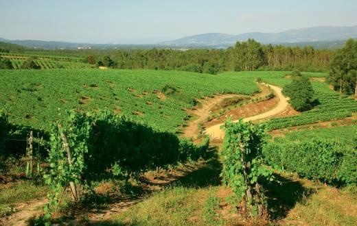 Tecnovino Terras Gauda proyecto suelos del viñedo