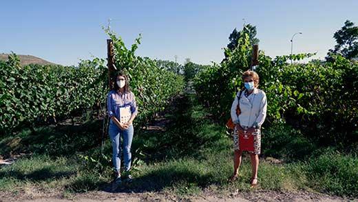 Tecnovino Universidad de La Rioja cubiertas vegetales en viñedos tesis 2