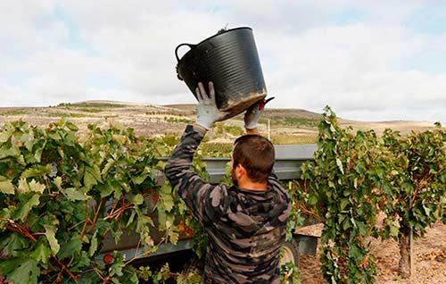 Tecnovino precios de la uva vendimia ribera baja