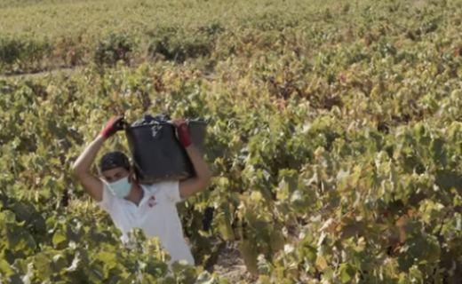 Tecnovino vendimia Rioja