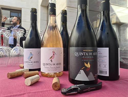 Tecnovino vendimia en el Campo de Calatrava vinos de Quinta de Aves