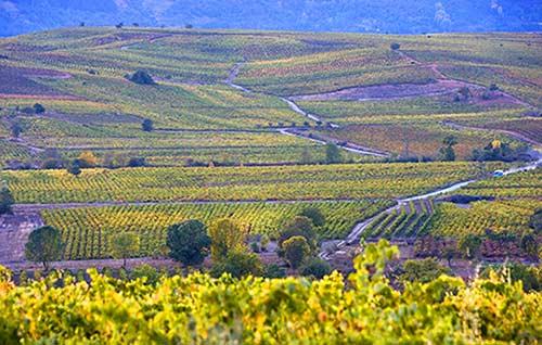 Tecnovino Dia Mundial del Enoturismo Ruta del Vino del Bierzo foto Xurxo Lobato detalle viñedo