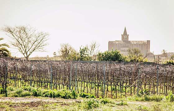 Tecnovino enoturismo en Mallorca Blanca Terra detalle