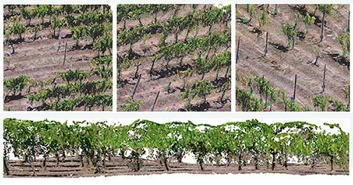 Tecnovino gestión de viñedos vides 3D