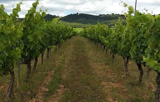 Tecnovino pesticidas en el viñedo detalle