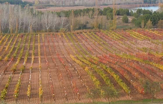 Tecnovino viticultura ante el cambio climatico Redvitis detalle