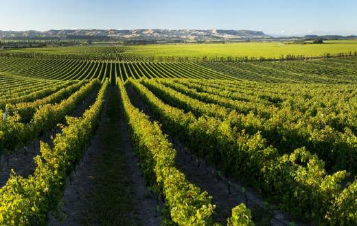 Tecnovino Pernod Ricard Winemakers