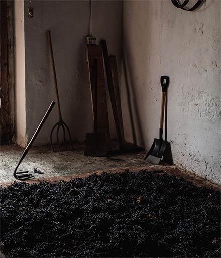 Tecnovino recuperacion lagar subterraneo Fondillon Luis XIV 1