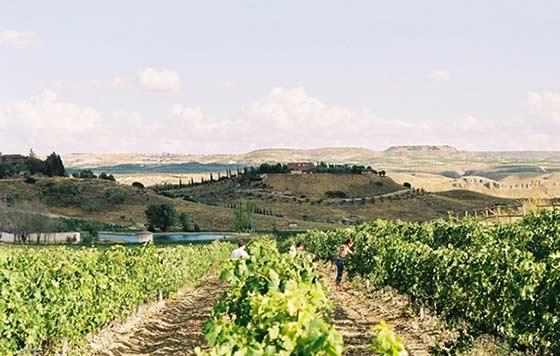 Tecnovino viñedo en Ruta del Vino de Madrid