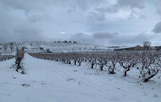 Tecnovino nieve en los viñedos Ramón Bilbao