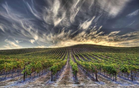 Tecnovino WineFuture cumbre online