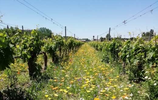 Tecnovino proyecto VITISAD prácticas vitivinícolas sostenibles