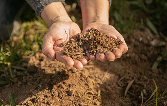 Tecnovino uso del cobre en el viñedo proyecto Coppereplace suelo 2