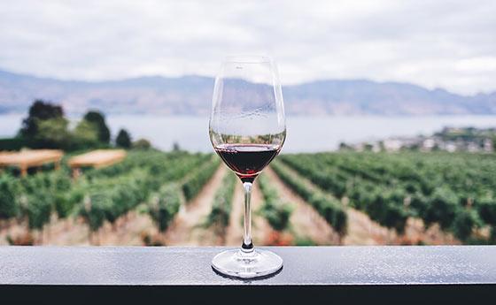 Tecnovino vino en Galicia 4