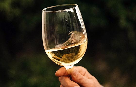 Tecnovino vino en Galicia 5