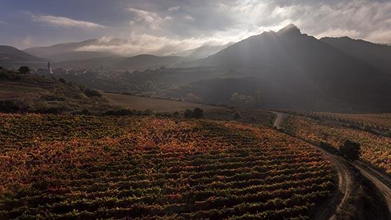 Tecnovino Bodega 2020 vino Ansa vinedo Salinillas Labastida