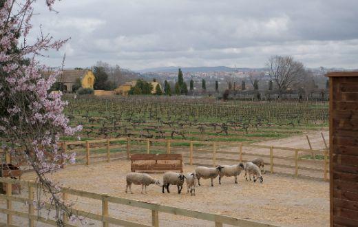 Tecnovino Familia Torres viticultura regenerativa