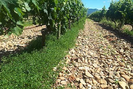 Tecnovino proyecto Vitisad prácticas vitivinícolas sostenibles Vivanco