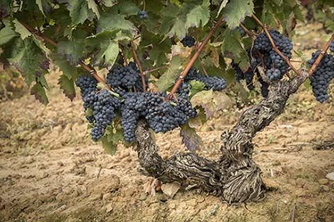 Tecnovino vino Ansa Bodegas 202 vendimia